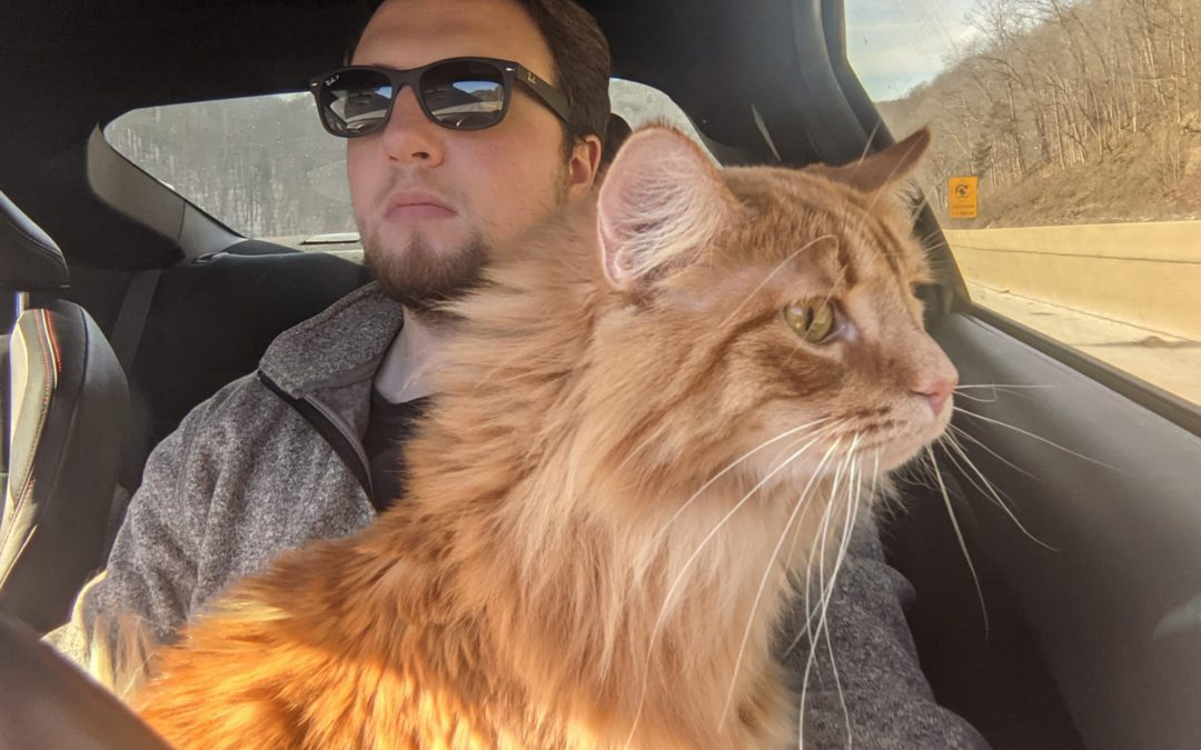 Moving with Pets – Five Ways to Simplify the Process